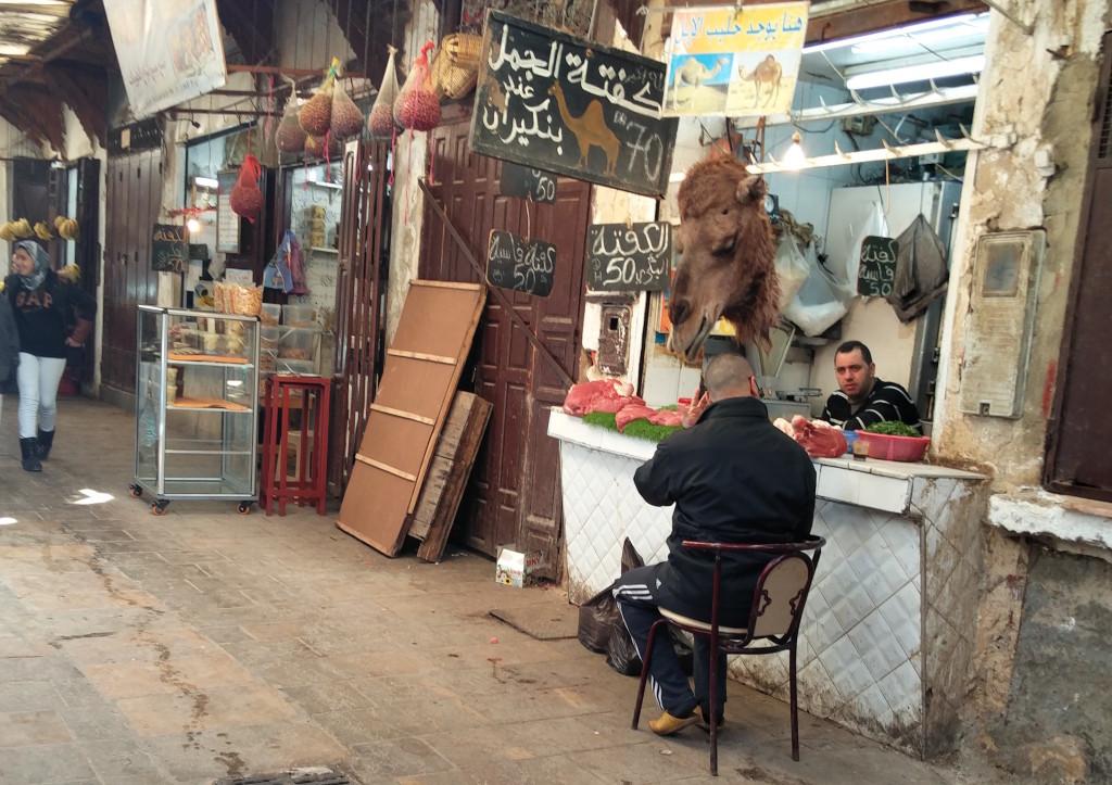 13_fes_camel_head