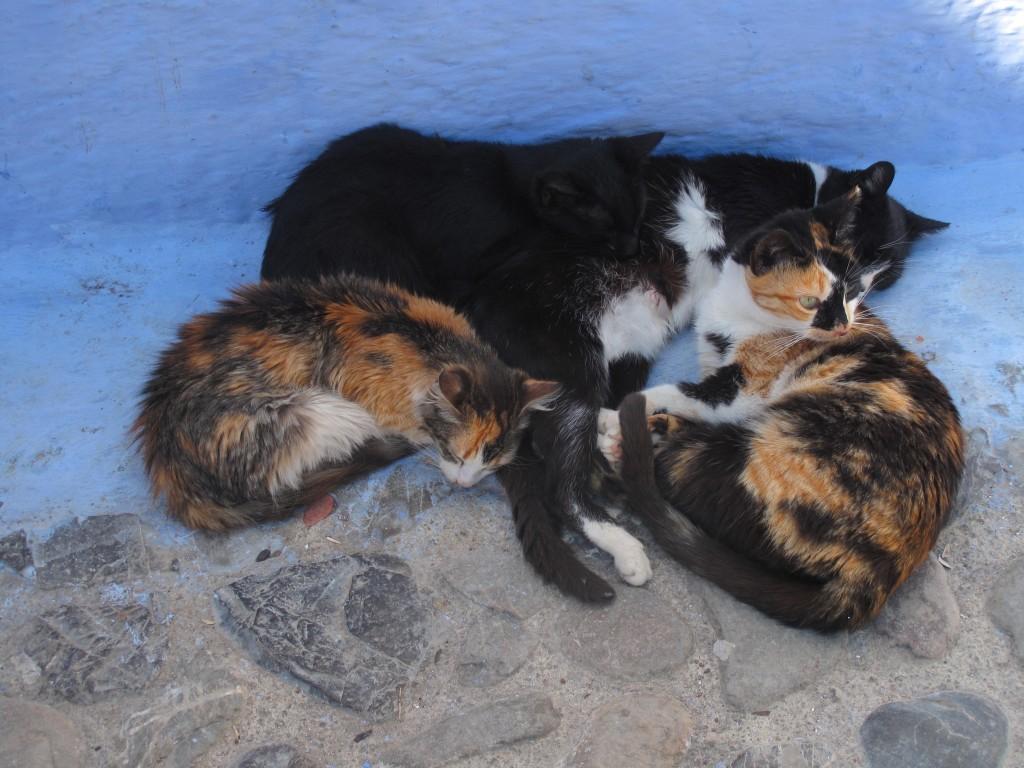 40_cat_pile