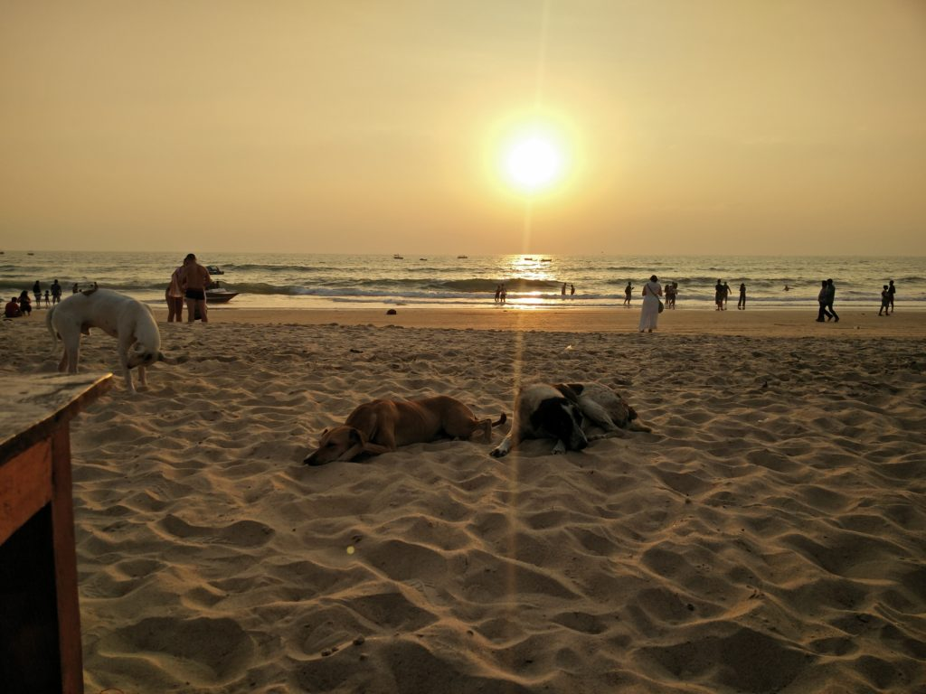 72_beach_dogs_sunset