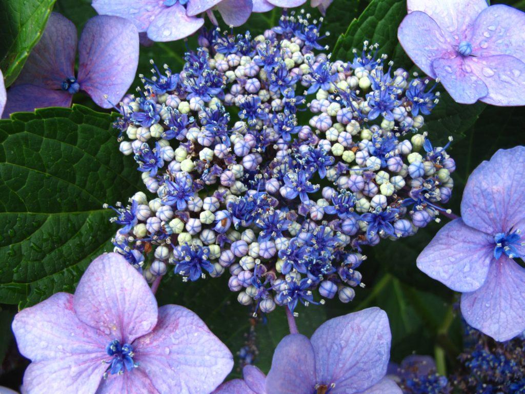 07_flowers