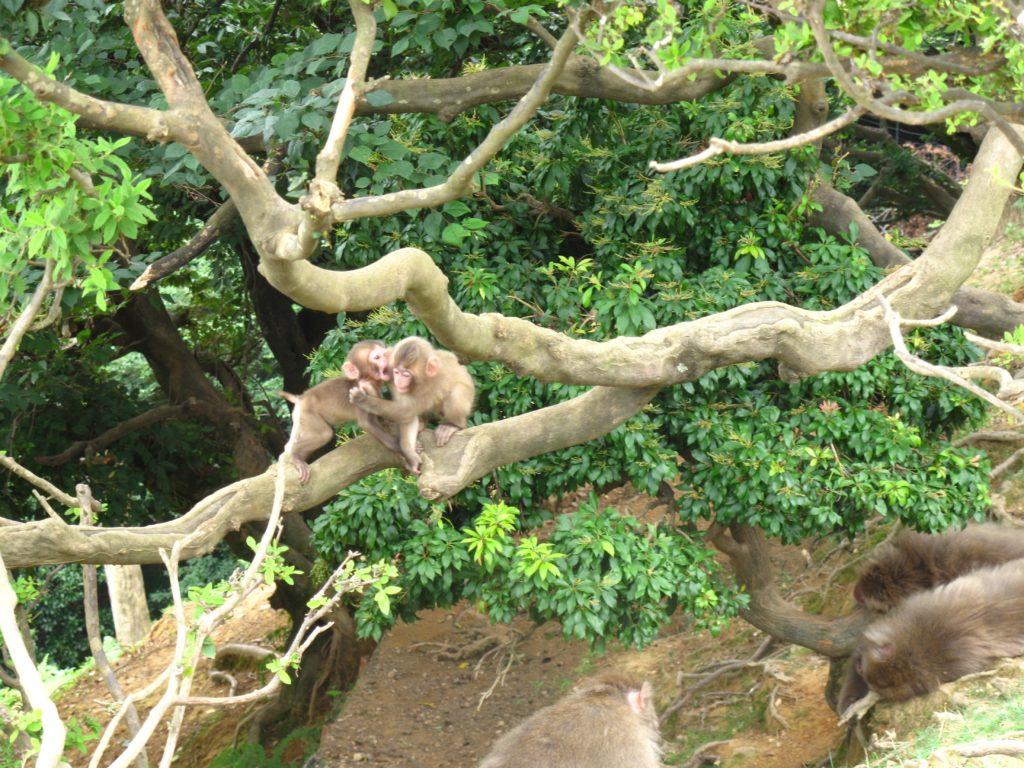 26_monkey_babies
