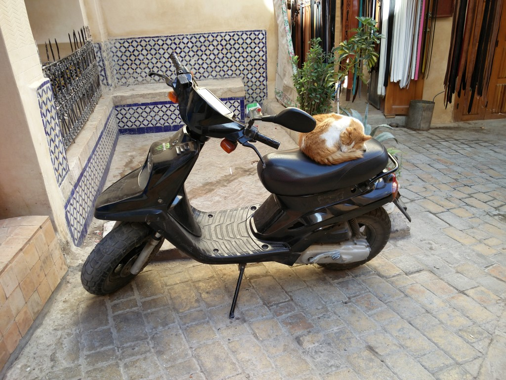 15_fes_cat_motorcycle