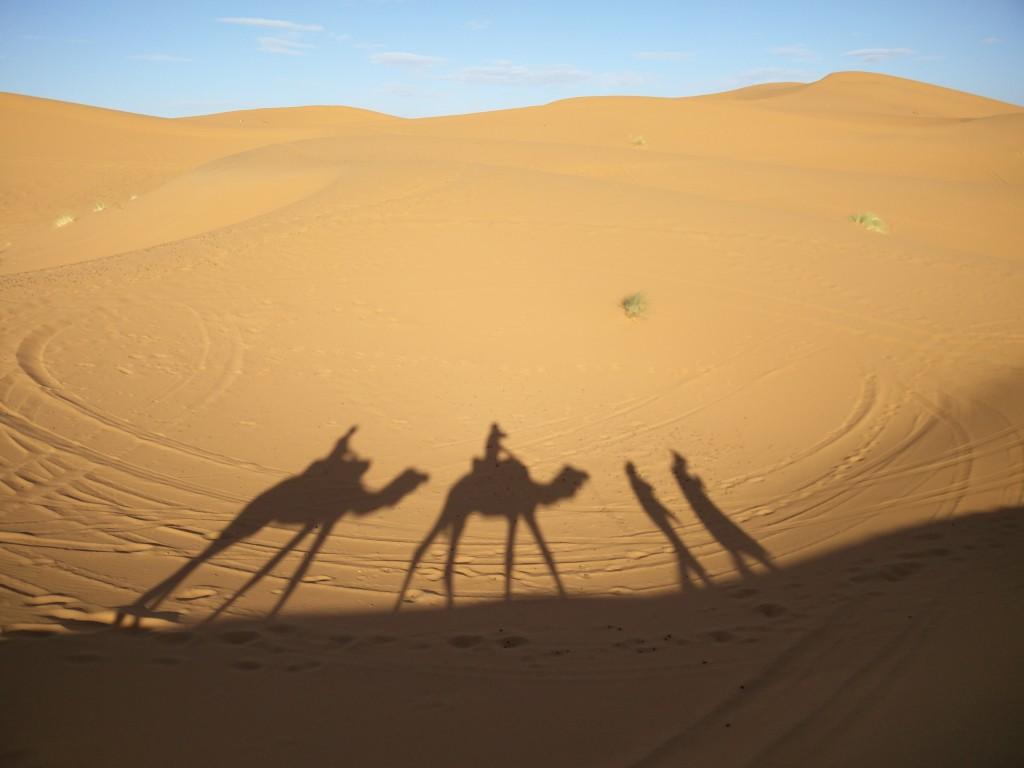 30_camels