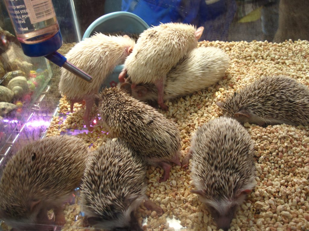 15_hedgehogs