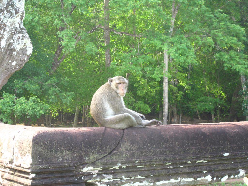 49_monkey