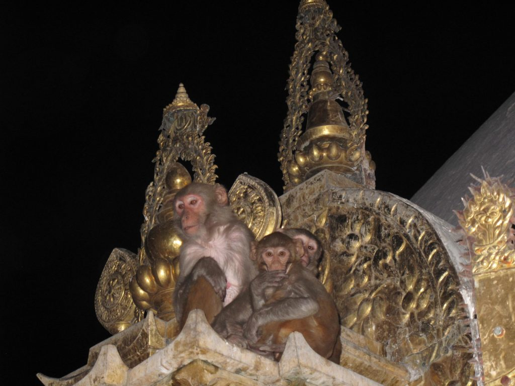 IMG_6989_Monkeys2
