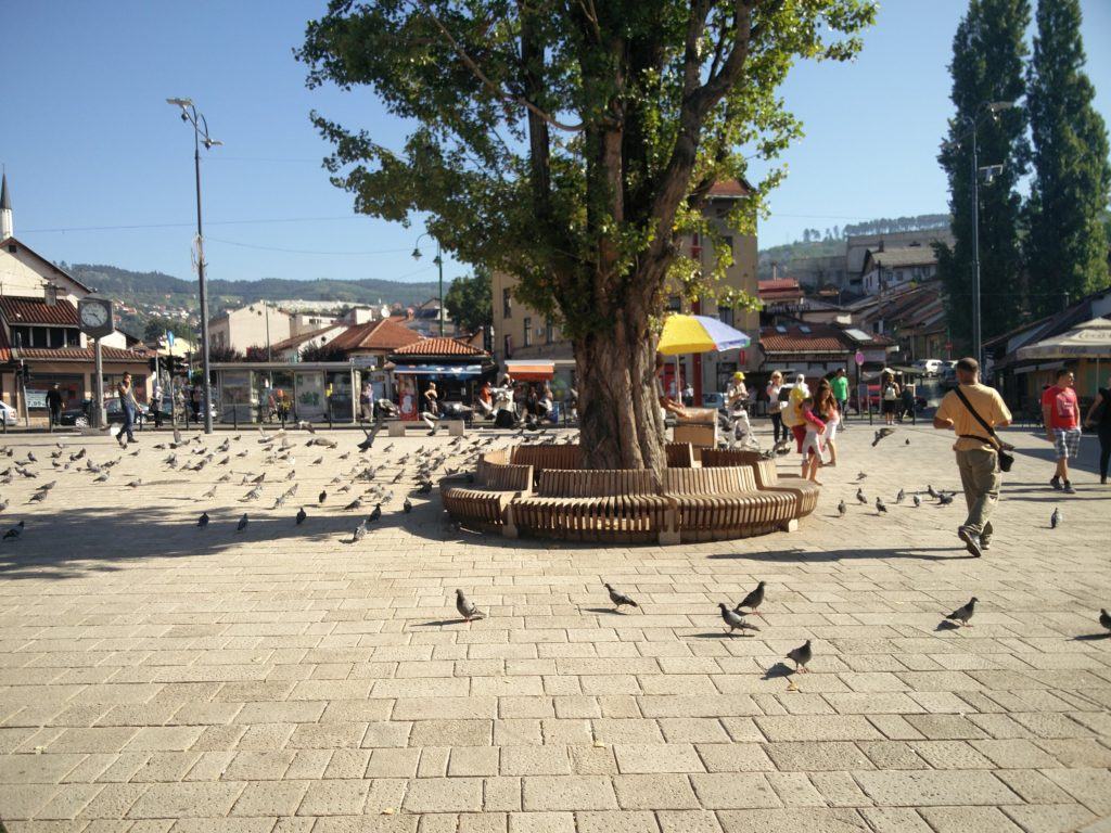 08_pigeon_square