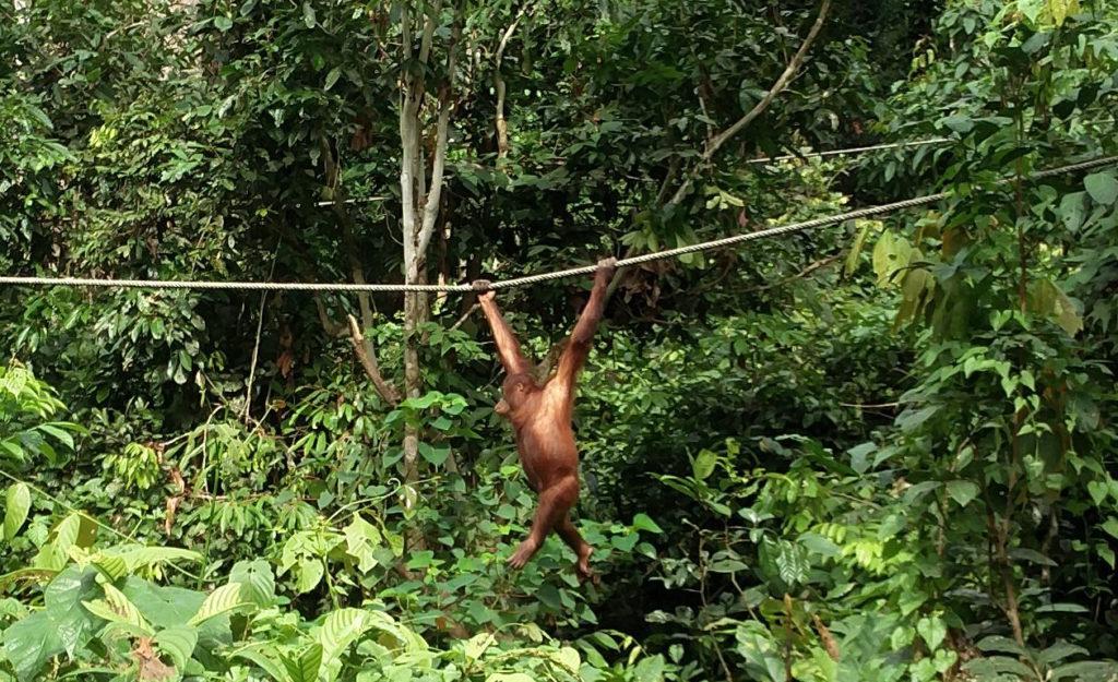 22_orang_rope