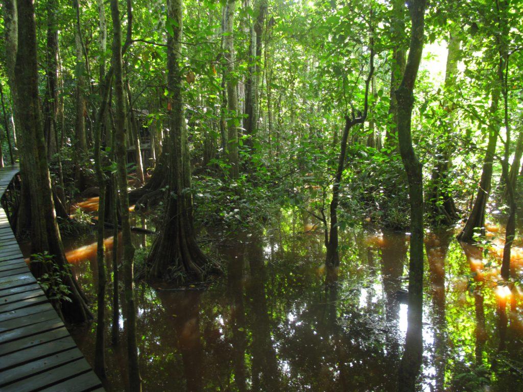 img_8948-tanswamp